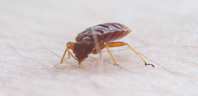 How Do Hotels Stop Bed Bugs